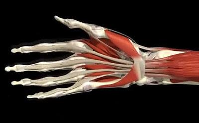 Почему болят кисти, пальцы рук, суставы большого и указательного ...