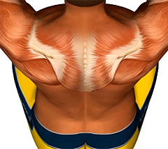 При остеохондрозе шейного отдела позвоночника может быть повышение температуры