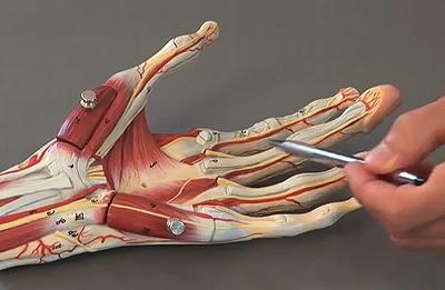 Травмы связок пальцев руки (растяжения): что делать — лечение ...