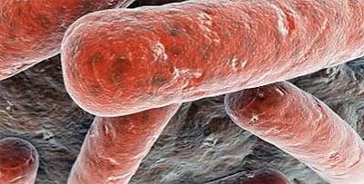 палочка Коха - бактерия вызывающая симптомы туберкулеза